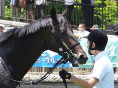 20150628 東京6R 3歳未勝利 コスモポッポ 09
