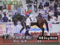 20190622 阪神5R 2歳メイクデビュー シゲルタイタン 01