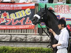 20150628 東京11R パラダイスS ショウナンアチーヴ 13