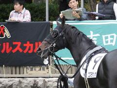 20151031 東京7R 3歳上500万下 コスモポッポ 09