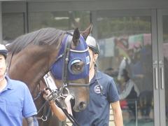 20180617 東京3R 3歳未勝利 ダノンシャレード 03