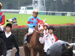 20151123 東京10R 鷹巣山特別 レーヌドブリエ 23