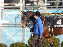 20141227 中山10R リヤンドファミユ 02