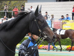 20151031 東京5R 2歳メイクデビュー ラルゴランド 03