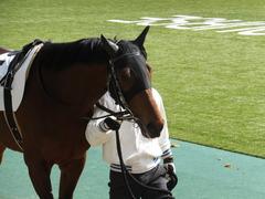 20150221 東京5R 3歳未勝利 トーセンカナロア 07