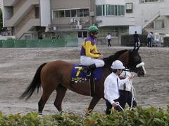 20140915 大井11R 東京記念 ユーロビート 15