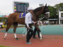 20140915 大井11R 東京記念 ユーロビート 06