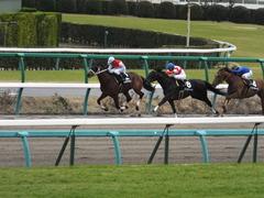 20150321 中山10R 韓国馬事会杯 ショウナンアポロン  15
