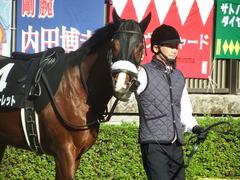 20181125 東京8R オリエンタル賞(1000) ロジスカーレット 15