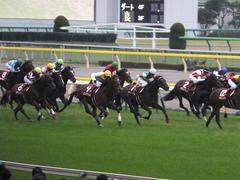 20141108 東京11R 京王杯2歳S マイネルグルマン 13