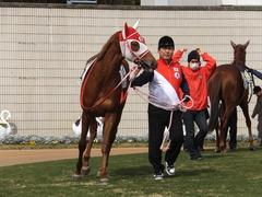 20150207 京都5R 3歳未勝利 レーヌドブリエ 13