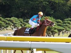 20161016 新潟10R 粟島特別(牝500) レーヌドブリエ 30