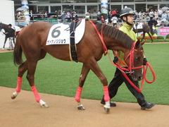 20180929 中山5R 2歳牝馬メイクデビュー オトナノジジョウ 16