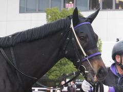 20170114 京都8R 4歳上牝馬500万下 サラマンカ 10
