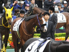 20161030 東京1R 2歳未勝利 プンメリン 11