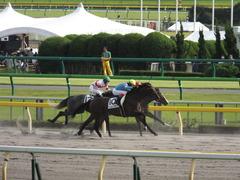 20141011 東京8R ヴィルトグラーフ 08