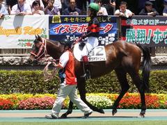20170604 東京4R 3歳未勝利 ホウオウドリーム 17