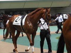 20160604 東京3R 3歳未勝利 オートシャンティ 04
