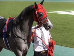 20170430 東京11R スイートピーS 3歳牝馬OP ミザイ 05