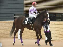 20190323 中山9R ミモザ賞 3歳牝馬(500) トロハ 14