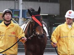20151224 大井2R 2歳新馬 マルカンヒラリー 04