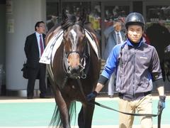 20150426 東京1R 3歳未勝利 ジュンコアー 05