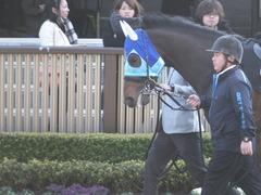 20170128 東京10R クロッカスS 3歳OP アドマイヤシナイ 03