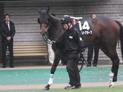 20151123 東京9R 伊勢佐木特別 ヴィルトグラーフ 06