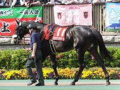 20140503 東京11R 青葉賞 ショウナンラグーン 06