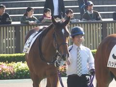 20161120 東京1R 2歳未勝利 メガポリゴン 02