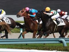 20161002 阪神7R (500) レーヌドブリエ 21