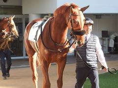 20181228 中山2R 2歳牝馬未勝利 パーフェクトワン 02