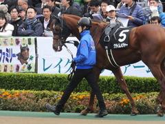 20161127 東京7R ベゴニア賞 クライムメジャー 08
