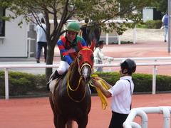 20161002 阪神8R (500) テイケイラピッド 15