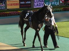 20141122 東京9R からまつ賞 ファインライナー 08