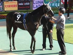 20141122 東京9R からまつ賞 ファインライナー 10