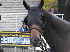 20151123 東京9R 伊勢佐木特別 ヴィルトグラーフ 08
