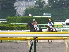 20150614 東京3R 3歳未勝利 コスモポッポ 14