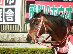 20180128 東京10R 早春S(1600) ホウオウドリーム 14