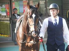 20190216 東京9R フリージア賞 3歳500万下 ホウオウサーベル 05