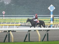 20141012 東京8R 東京HJ メジロサンノ14