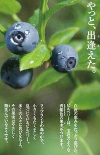 やっと出逢えた、青紫色の果実。ブルーベリーアイ
