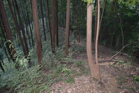 戸倉山2 ブログ用