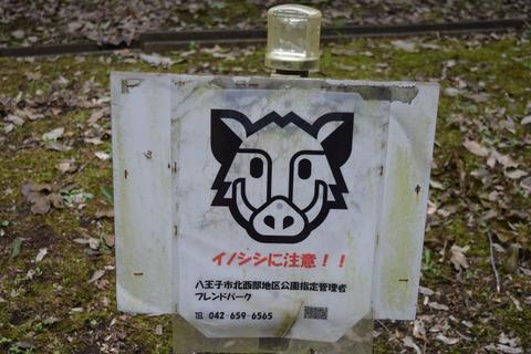 小田野城跡 イノシシ看板 ブログ用
