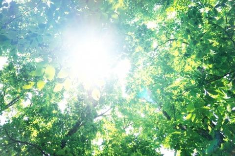 緑豊かな山の木々に太陽の光が差し込む