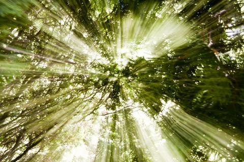 樹木からパワーをもらう