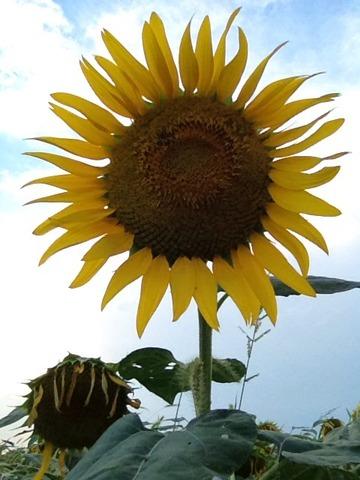 2012-08-17 22:55:53 写真15