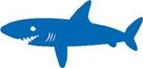 コバンザメ(サメ)