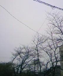 雨風の日090314