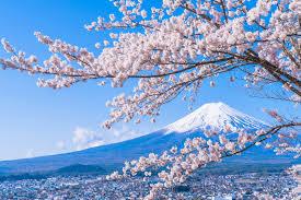 さくら&富士山